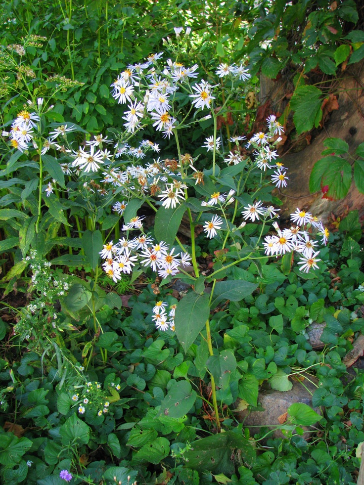 Native Identification Oklahoma Plants