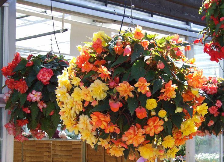 Indoor Hanging Plants Flowers