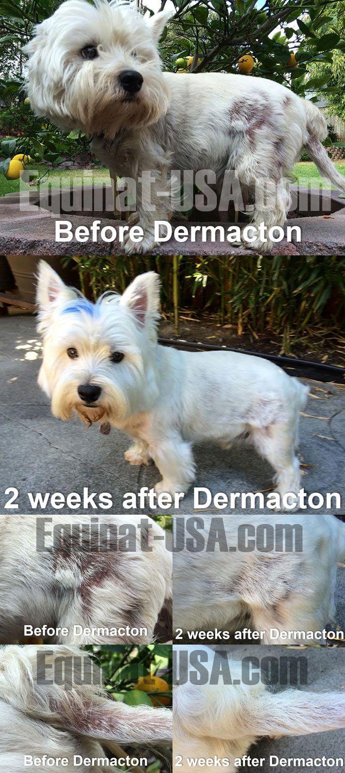 Herbal Treatments Dogs Flea