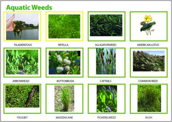 Farm Pond Algae Control