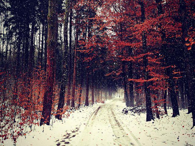 photography tumblr winter | my photos | Pinterest ...