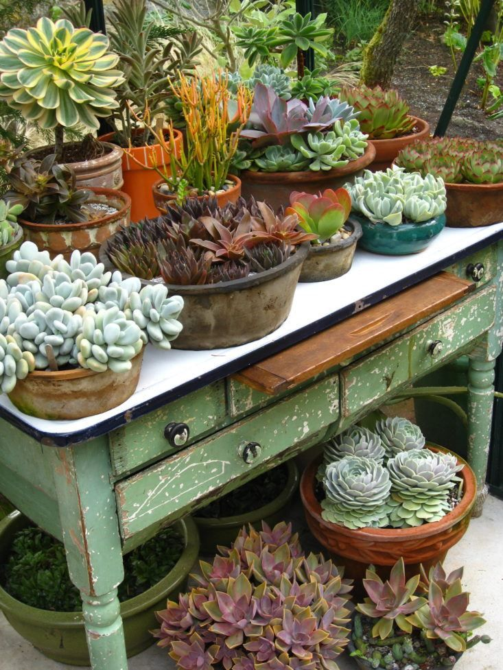 Ideas Succulent Display