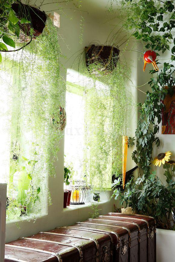 Indoor Window Plant Hangers