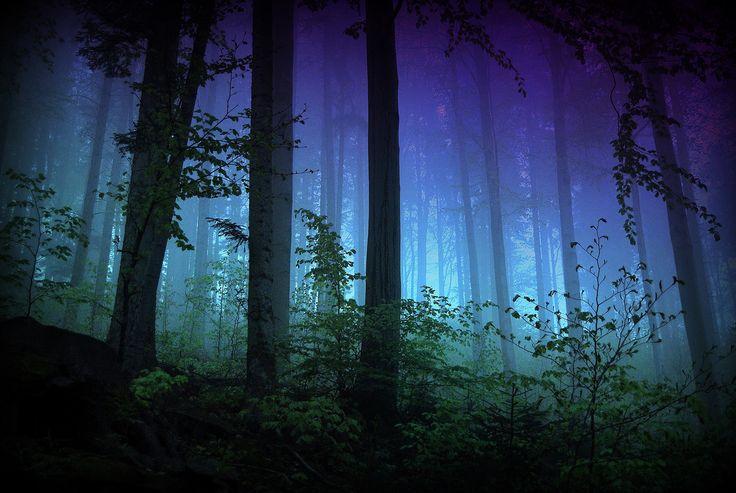 Northern Lights Lyrics
