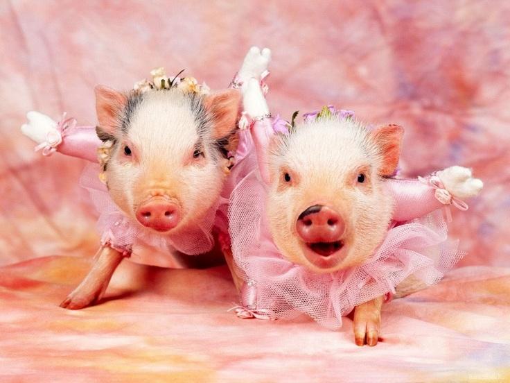 Christmas Pigs Teacup