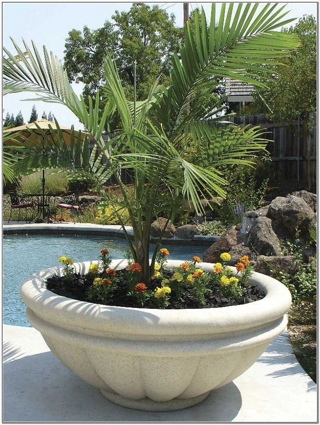 Extra Large Planters Trees