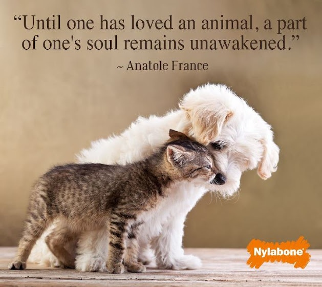 Loving Your Dog Quotes