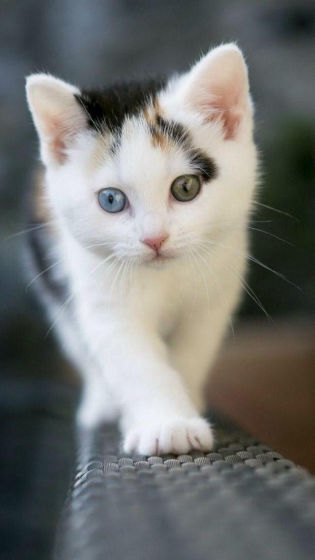 Genetics Eye Color Hazel