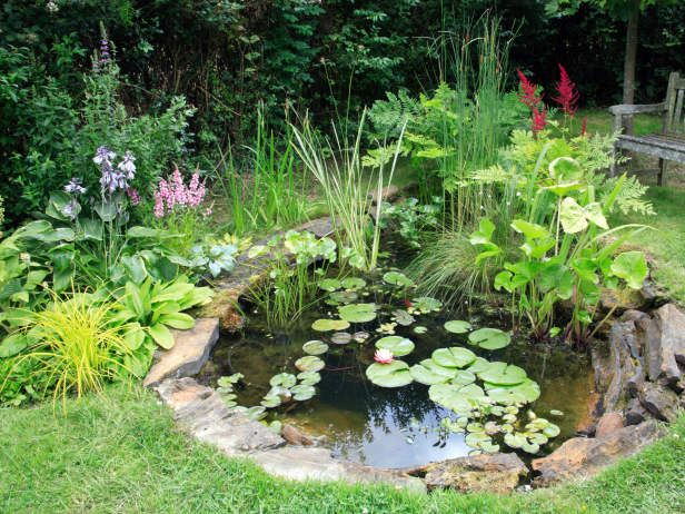 Plants Around Water Gardens
