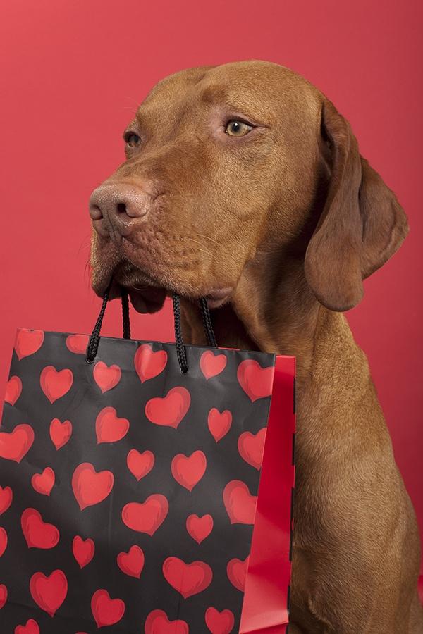 Cute Valentine Puppies