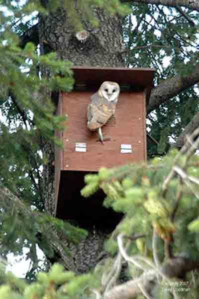 25+ Best Ideas about Owl Box on Pinterest | Owl house ...