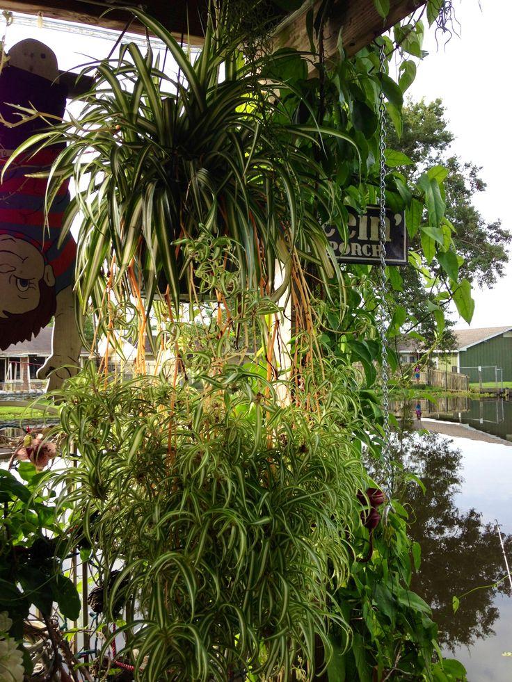 Best Plant Inside House