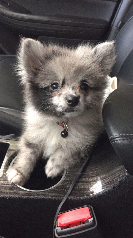 Cutest Ever Baby Bear