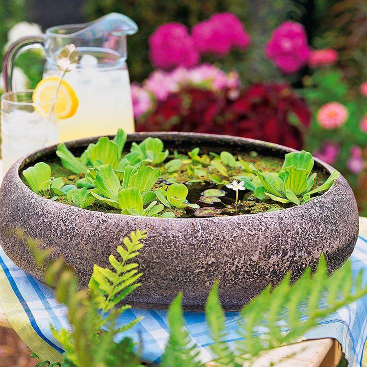 Water Hyacinth Indoors
