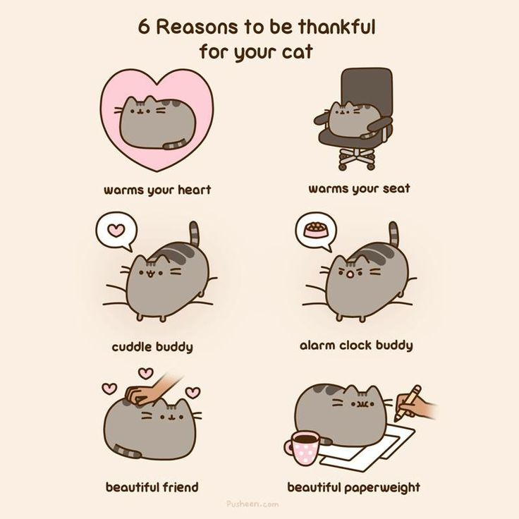 White Black Cat Meme Pusheen And