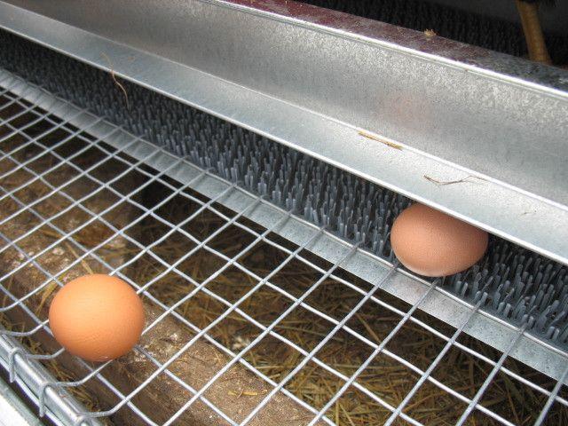 Building Rollaway Nesting Box
