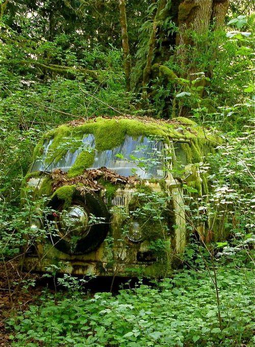 Forest Green Volkswagen Bus