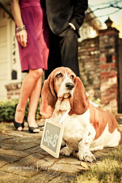 Wedding Attire Dogs