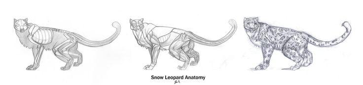 Tiger Anatomy Muscles Shoulder