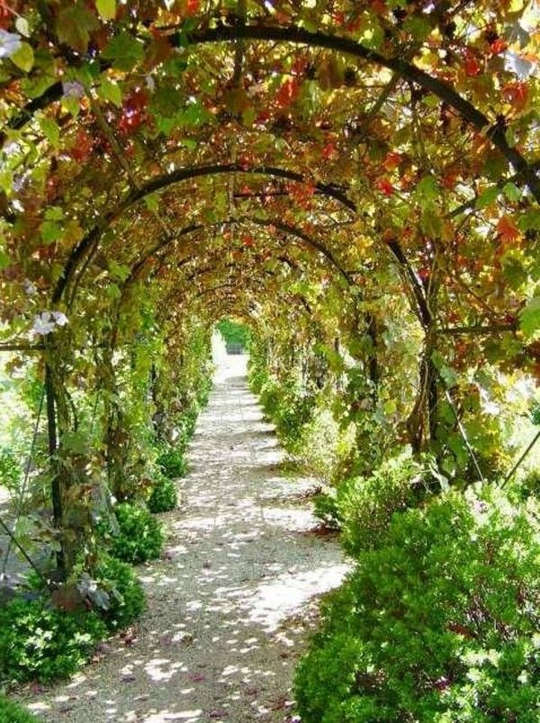 How To Build A Grape Arbor Lasting Green Thumbs Up