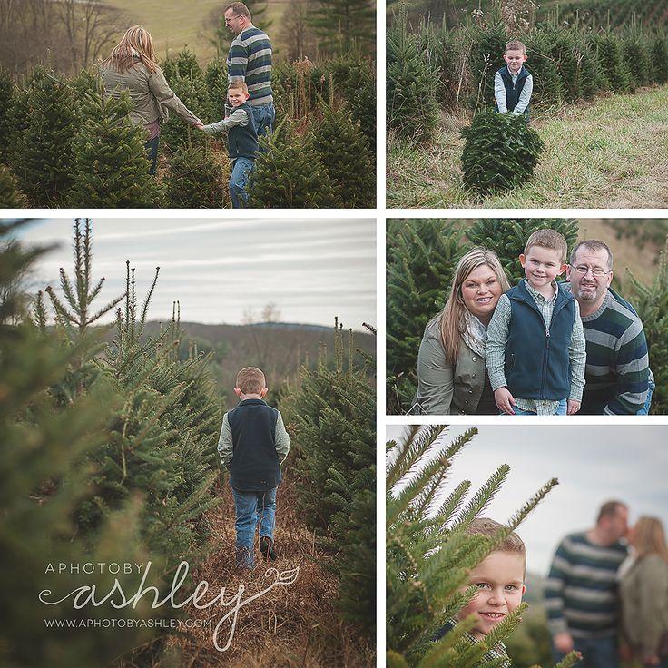 Sparta Christmas Tree Farms