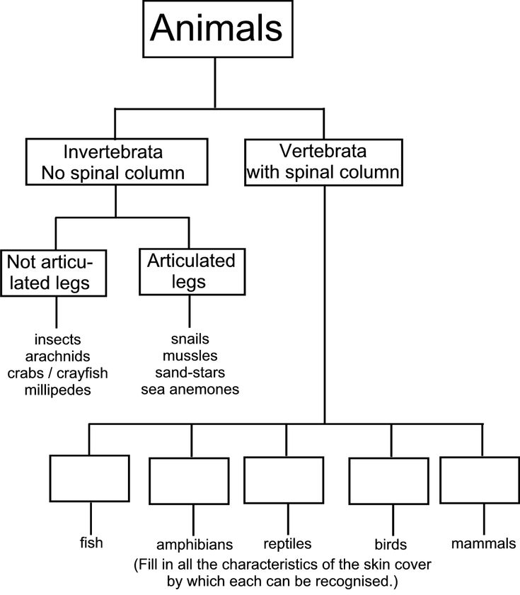 Venn Diagram Word Problem Exercises