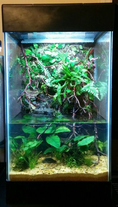 15 Gallon Paludarium. : PlantedTank | indoor aquatic ...