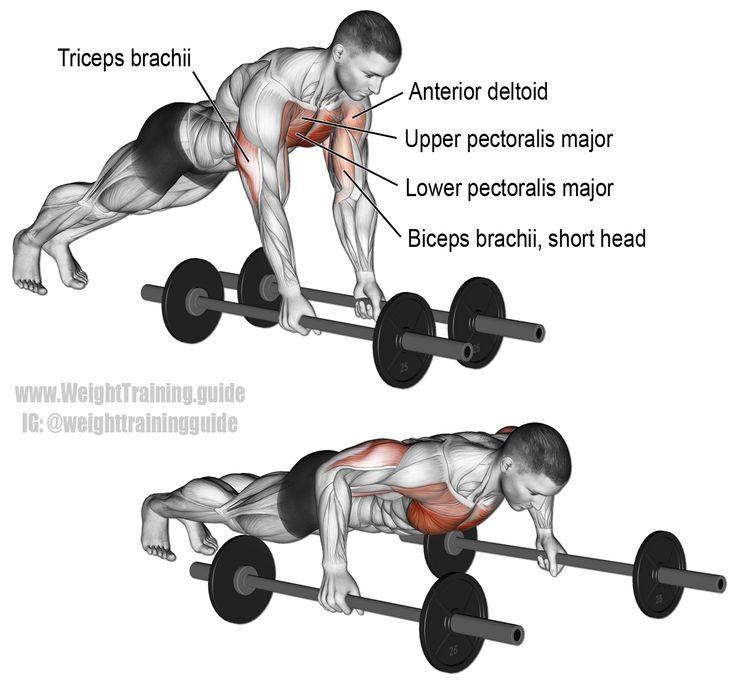Best Anterior Deltoid Exercises