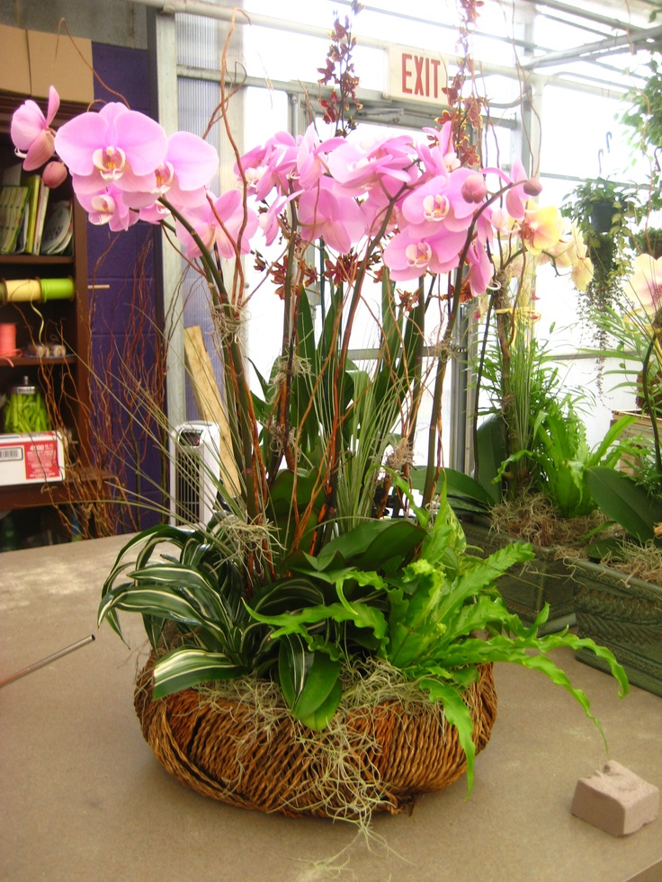 Tropical Colors Home Interior