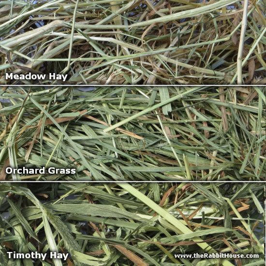 When Cut Bermuda Hay