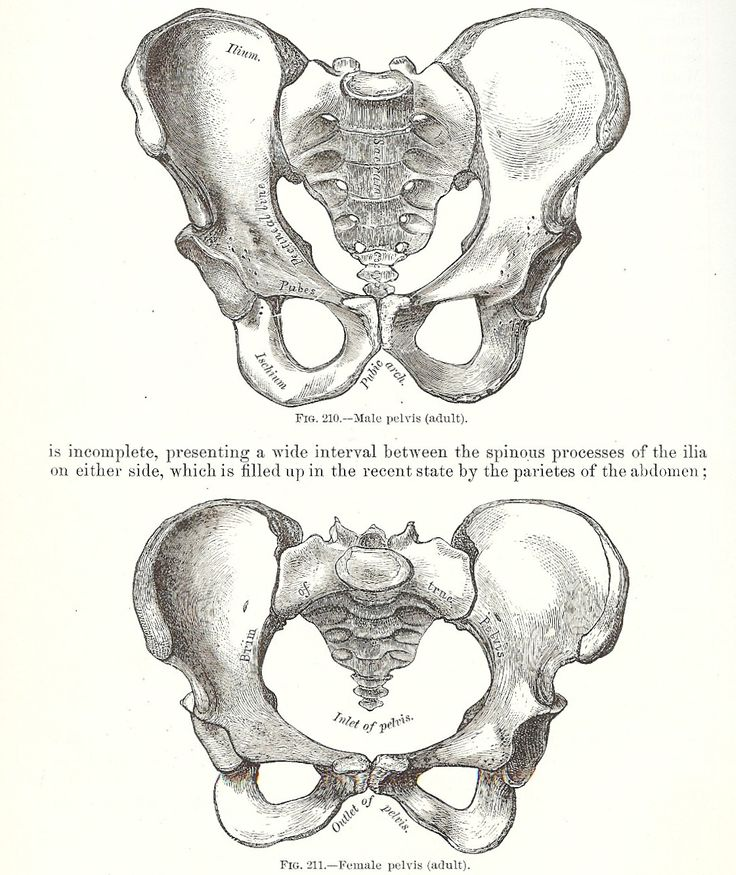 Pelvis Pubic Bone Break Picture