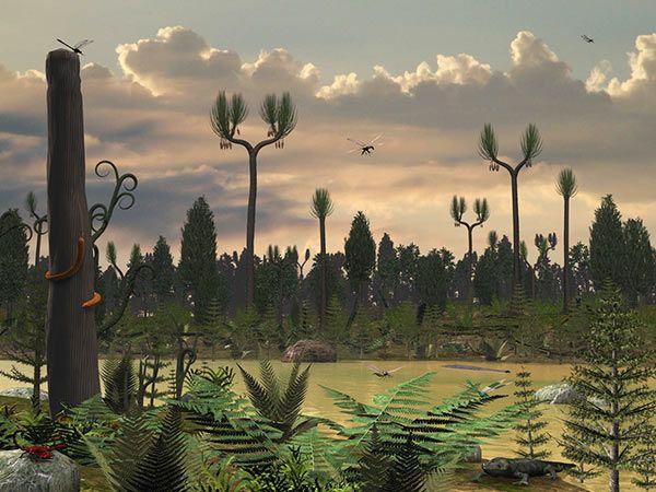 Prehistoric Fossil Giant Centipede