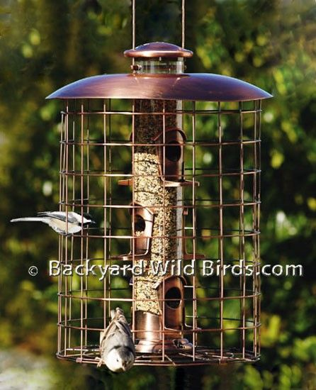 Caged Squirrel Proof Feeders