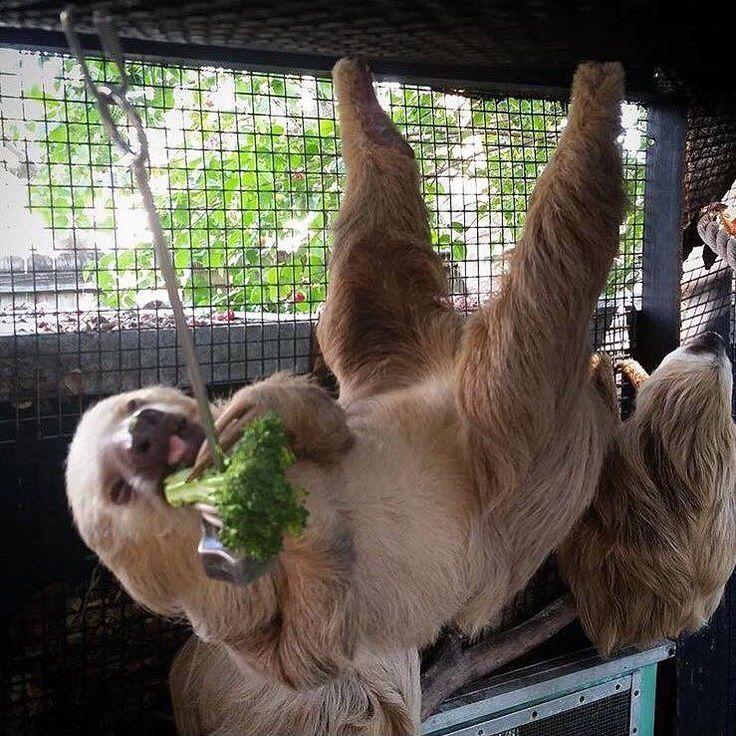 Sid Sloths Girlfriend