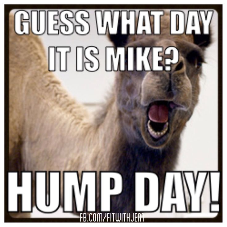Geico Saved Quote: Hump Day Camel Commercial Geico