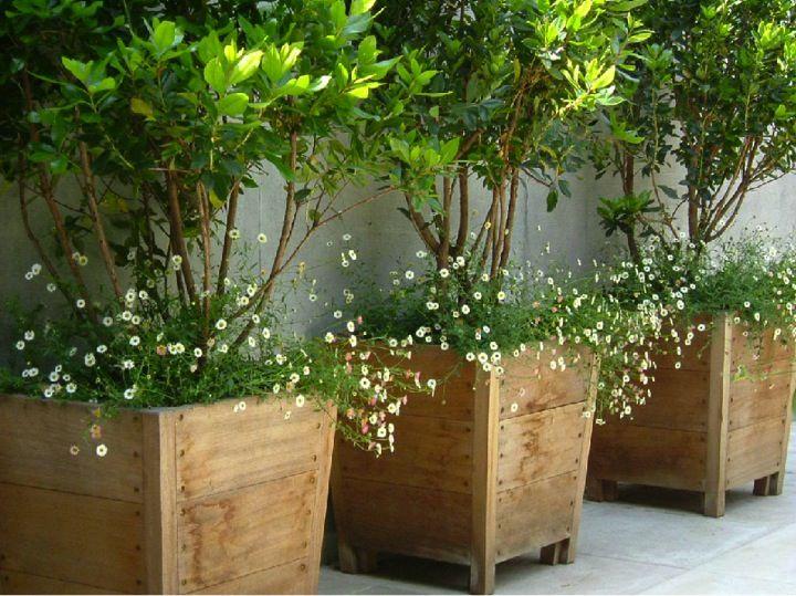 Clay Flower Pots Tall
