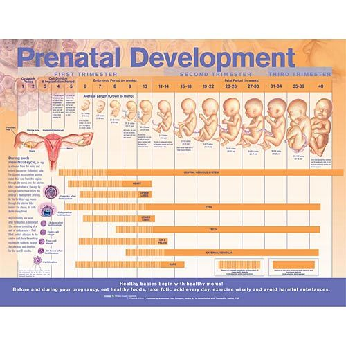 Rainbow Light Prenatal