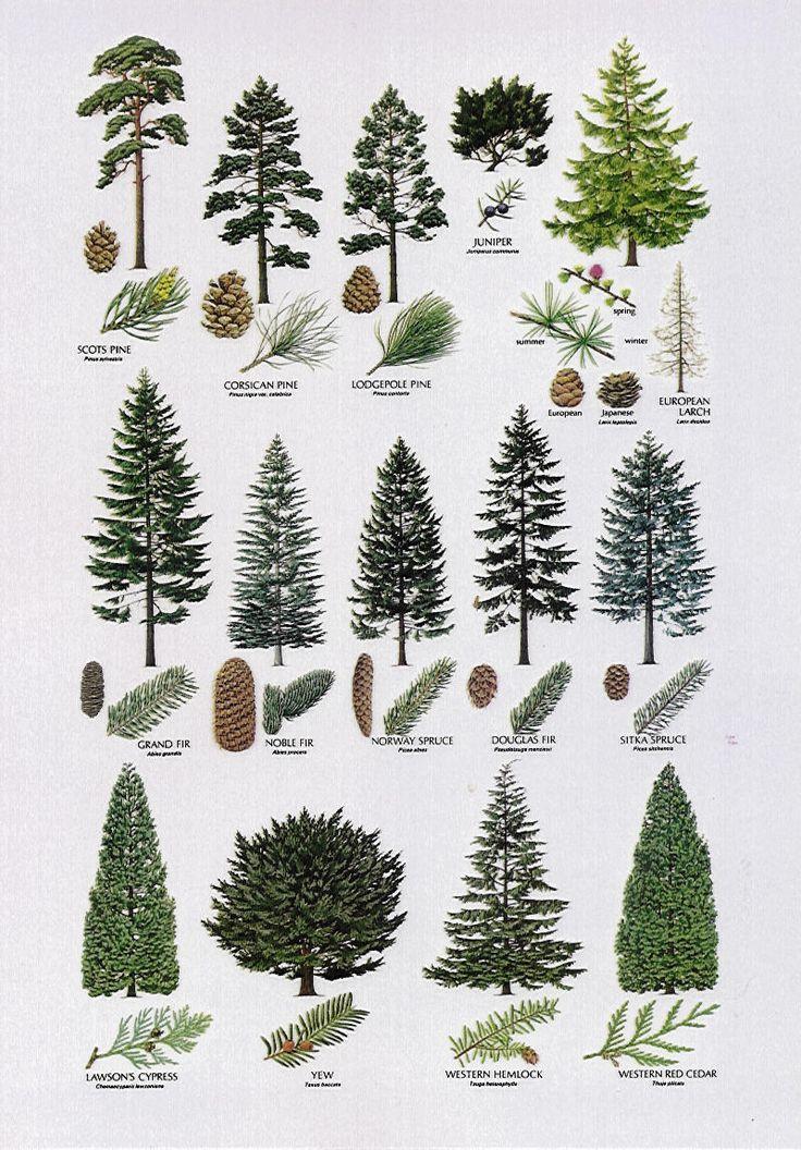 Tall Big Leaf House Plants