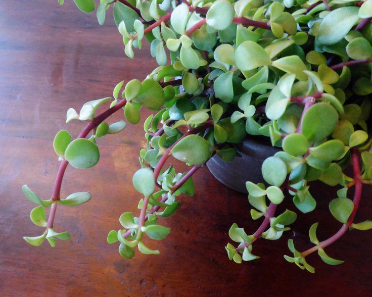 Best Small Plants Grow Indoors