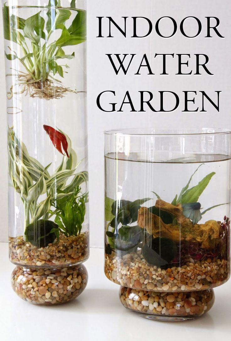 Indoor Plants Grow Water