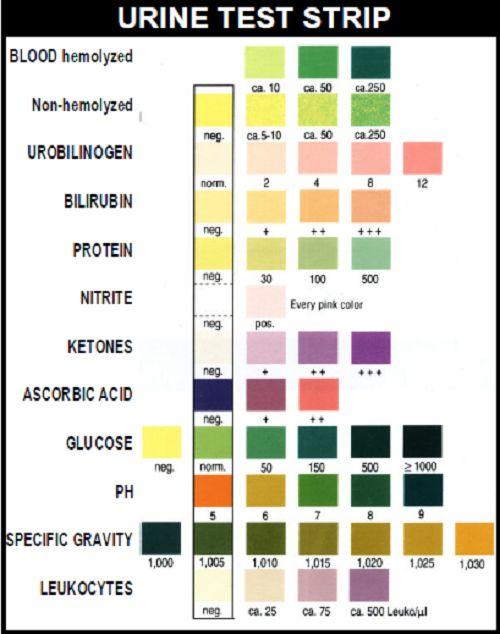 Cups Different Urine Drug Test