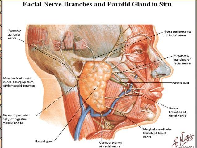 Under Bone Ear Lump Jaw Behind