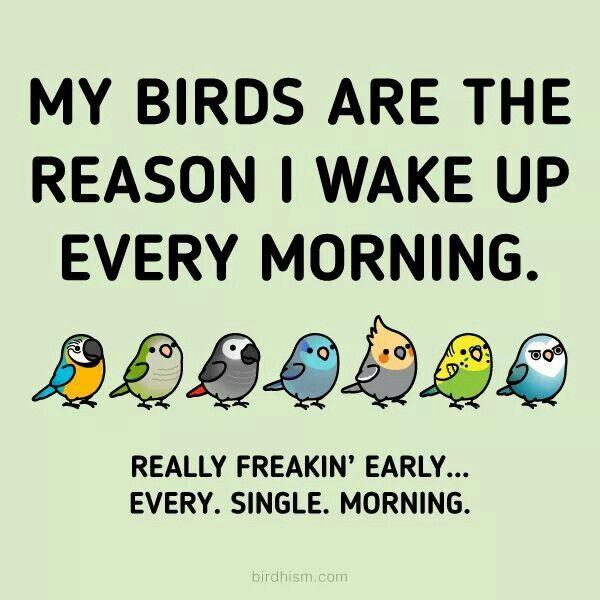 Loudest Alarm Clock Ever