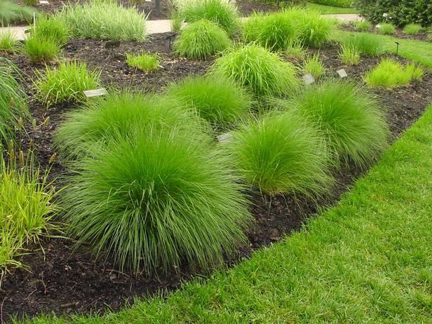 Types Of Ornamental Grasses Sun Home Improvements And