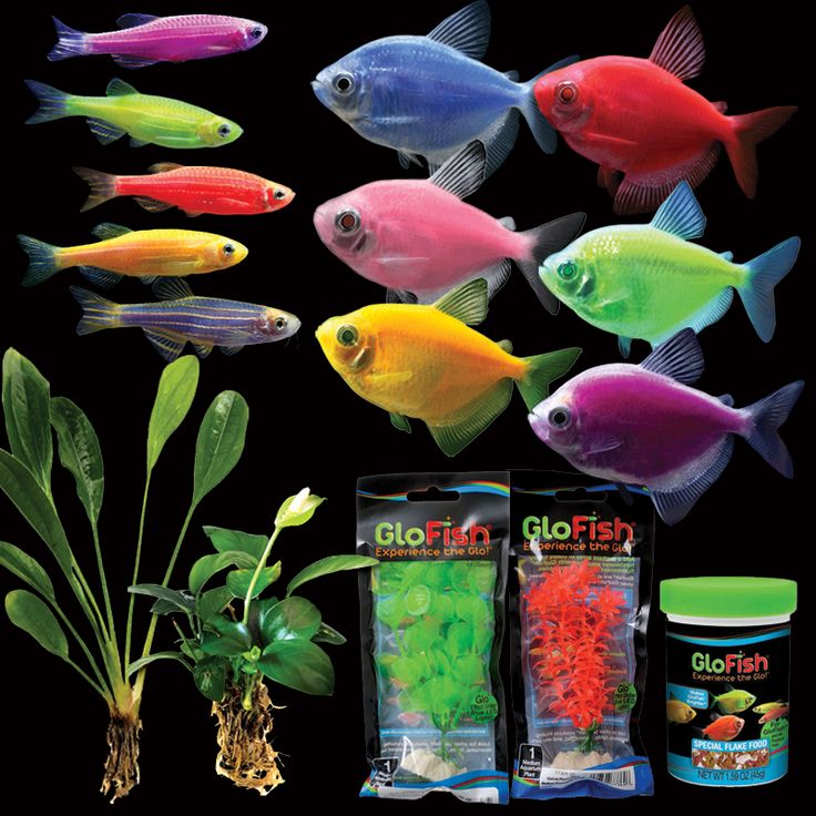 32 best images about Buy GloFish® Online on Pinterest