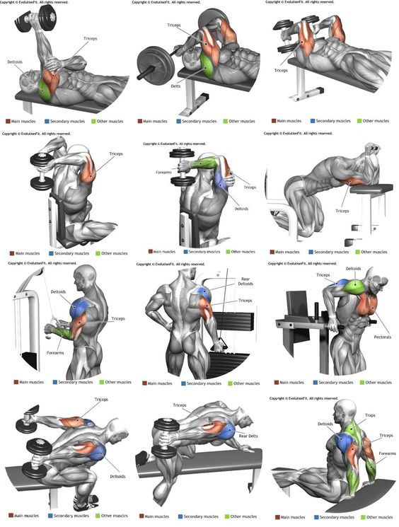 Anatomy Chart Muscular Workouts