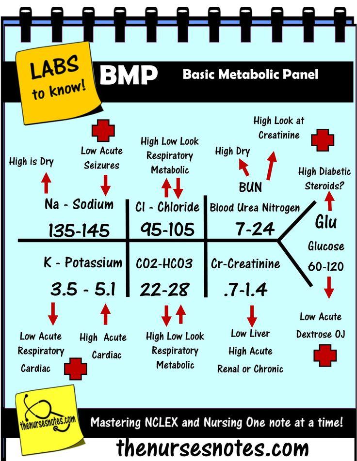 Basic Metabolic Panel Fishbone
