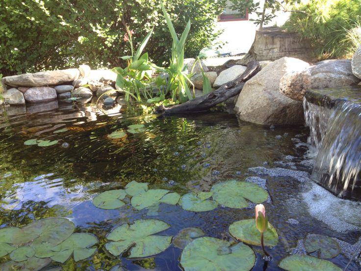 Backyard Pond Maintenance