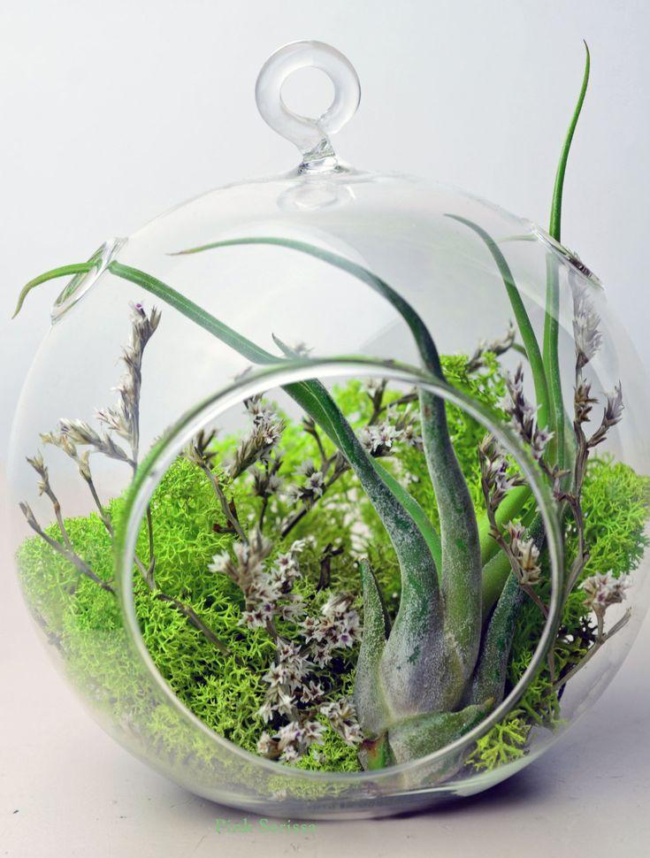 Succulent Plants Etsy