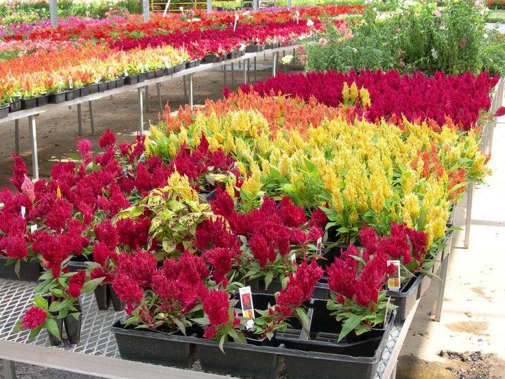 Hearty Indoor Plants